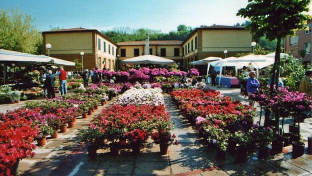 piazza_fiori
